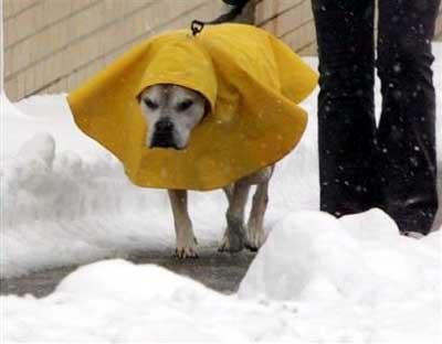dograincoat.jpg